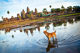 Angkor Wat Dog - Cambodia Photographic Print by  EvanTravels