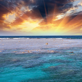 Queensland, Australia. Wonderful Colors of Coral Reef Photographic Print by  jovannig