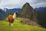 Machu Picchu, Peru, UNESCO World Heritage Site. One of the New S Photographic Print by  sunsinger