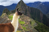 Machu Picchu, Peru, UNESCO World Heritage Site. One of the New S Fotografisk tryk af  sunsinger