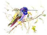 Hummingbird 4 Prints by Suren Nersisyan