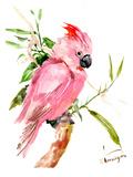 Cockatoo Plakat af Suren Nersisyan