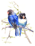 Blue Masked Lovebirds Art par Suren Nersisyan
