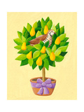 A Partridge in a Pear Tree Affiches par  andreapetrlik