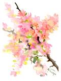 Cherry Blossom Sakura Prints by Suren Nersisyan