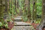 Kumano Kodo, Sacred Trail in Wakayama, Japan Photographic Print by  SeanPavonePhoto
