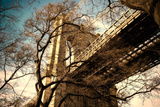 Brooklyn Bridge through Winter Tree Branches Photographic Print by  EvanTravels