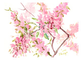 Cherry Blossom Prints by Suren Nersisyan