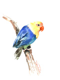 Blue Yellow Lovebird Art by Suren Nersisyan