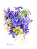 Violets Prints by Suren Nersisyan