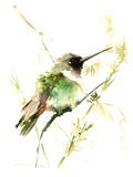 Hummingbird2 Print by Suren Nersisyan