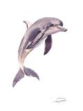 Dolphin Print by Suren Nersisyan
