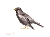 Common Blackbird Print by Suren Nersisyan