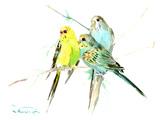 Parakeets Prints by Suren Nersisyan