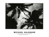 Palms by Full Moon Lit Sky North Shore Oahu, Hawaii 2001 Fotodruck von Michael Halsband