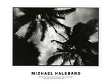 Palms by Full Moon Lit Sky North Shore Oahu, Hawaii 2001 Photographic Print by Michael Halsband