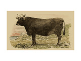 Antique Cow V Metal Print by Julian Bien