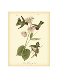 Anna Hummingbird Metal Print by John James Audubon
