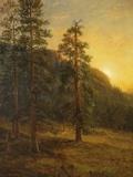 California Redwoods, 1872 Giclée-tryk af Albert Bierstadt