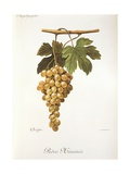 Pedro Mimenes Grape Giclee Print by A. Kreyder