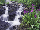 Waterfall and Wildflowers, Ouray, San Juan Mountains, Rocky Mountains, Colorado, USA Metal Print by Rolf Nussbaumer