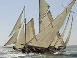 Mariquita under Sail, Solent Race, British Classic Yacht Club Regatta, Cowes Classic Week, 2008 Metal Print by Rick Tomlinson