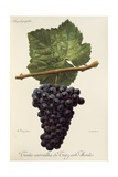 Tinta Carvalha De Traz-Os-Montes Grape Giclee Print by A. Kreyder