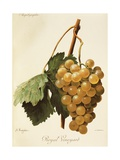 Royal Vineyard Grape Giclee Print by A. Kreyder