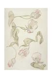 Tulips Giclee Print by Albert Williams