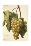 La France Grape Giclee Print by A. Kreyder