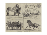 The Horse Show at the Alexandra Park Giclee Print by Alfred Chantrey Corbould