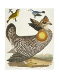 Birds 27. 1. Pinnated Grous. 2. Blue-Green Warbler. 3. Nashville W., 1808-1814 Giclee Print by Alexander Wilson