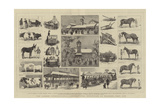 The London International Agricultural Exhibition at Kilburn, July 1879 Giclee Print by Alfred Chantrey Corbould