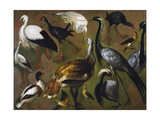 Study of Birds, by Alexandre-Francois Desportes (1661-1743), France, 18th Century Giclee Print by Alexandre-Francois Desportes