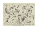 Noah's Ark at Covent Garden Giclee Print by Alfred Chantrey Corbould