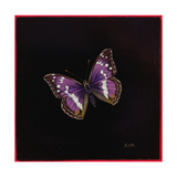 Purple Emperor Butterfly, 2000 Giclee Print by Amelia Kleiser