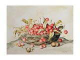 Basket of Cherries, 1998 Giclee Print by Amelia Kleiser