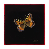 Small Tortoiseshell Butterfly, 1998 Giclee Print by Amelia Kleiser
