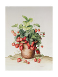 Strawberries in a Pot, 1998 Giclee Print by Amelia Kleiser