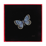 Large Blue Butterfly, 2000 Giclee Print by Amelia Kleiser