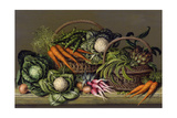 Basket of Vegetables and Radishes, 1995 Giclee Print by Amelia Kleiser