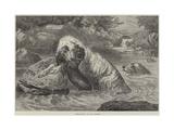 Otter-Hounds Giclee Print by Basil Bradley