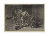 Jaguar and Cubs at the Jardin Des Plantes Giclee Print by Auguste Andre Lancon