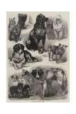 Prize Dogs at the Paris Dog Show Giclee Print by Auguste Andre Lancon
