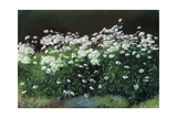 Shasta Daisies, 1992 Giclee Print by Anthony Rule