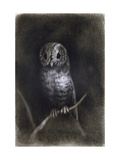 Owl Giclee Print by Andrea Mantegna