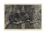 The Triumphant Turkeys Giclee Print by Arthur Boyd Houghton