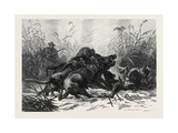 A Boar Hunt Giclee Print by Carl Friedrich Deiker