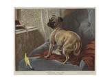 What Can This Be Giclee Print by Carl Constantin Steffeck