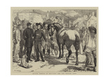 Buying Horses in Brittany for the French Army Giclee Print by Basil Bradley